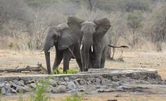 _DSC9274 (acomb) Tags: tanzania roadtrip ruaha tandala
