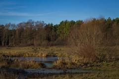 Storchenwiesen (steinmann1969) Tags: wiese wasser teich storch walldorf natur naturschutzgebiet wasservögel landschaft biotop nusloch rheinebene