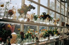 A heart for every flower (worteinbildern) Tags: film meinfilmlab analog stockholm 35mm autumn flowers