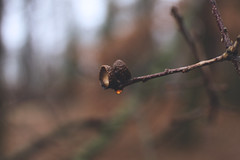 The Treat (Violet Paradise) Tags: nature woods forest winter bokeh blurry shallowdof naturelover natural brown organic fruits nuts shell raindrops drop delicate tender patient silent