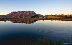 Mt Roland and Ripples (NettyA) Tags: australia eaglesnestretreat mountain mtroland tasmania tassie westkentish dam landscape reeds reflection sunrise water ripples