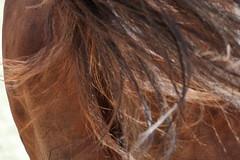_MG_6231 (dreiwn) Tags: dressurprüfung dressurreiten dressurpferd ridingarena reitturnier reiten reitplatz reitverein reitsport ridingclub equestrian horse horseback horseriding horseshow pferdesport pferd pony pferde dressur dressuur dressyr dressage