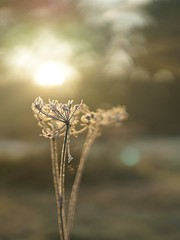 Flower (Schagie) Tags: sun zon light licht sunrise zonsopkomst herfst fall natuur nature ochtend early vroeg morning bokeh beauty
