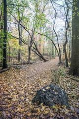 autumn path (JMS2) Tags: nature walk hike trail leaves autumn forest scenic foliage
