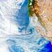 Smoky California, variant