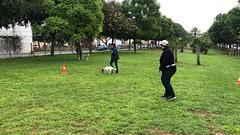 IMG_8518 (Doggy Puppins) Tags: educación canina adiestramiento canino perro dog
