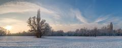 Winter panorama (D.Slaven) Tags: winter panorama panoramic wideangleperspectice snow cold jezero zima subotica serbia nikond600 tamron2875f28 palic lake landscape white