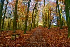 Walk to Stafford Castle (Ugborough Exile) Tags: stafford staffordshire midlands england uk sony a6300 treesdiestandingup trees 2018