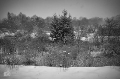 Snowfall (ChemiQ81) Tags: polska poland polen polish polsko chemiq польша poljska polonia lengyelországban польща polanya polija lenkija ポーランド pólland pholainn פולין πολωνία pologne puola poola pollando 波兰 полша польшча outdoor widok zimowy sky snow śnieg winter zima wojkowice tree drzewo covered white bw black blackandwhite