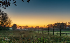 Horse pasture at icy autumn sunset in Wedel (olafthiel-photography) Tags: landscape sunset cold hamburg wedel pinneberg landschaft sonnenuntergang kalt sony sonyalpha a6000