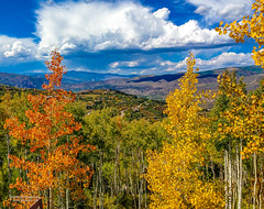 Twin Aspens (Tom Jodis) Tags: aspens colorado fall trees seasons scenic mountains