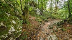 Slovénie J6-9 (Merlin H.) Tags: bohinj montagne paysage slovénie cielétoilé lacdebohinj landscape macro mountains nocturne papillon poselongue reflets
