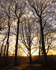 Sunset through the trees (PeskyMesky) Tags: aberdeen lochside bridgeofdon scotland woods wood forest tree trees sunset sunrise silhouette nature canon canon5d eos