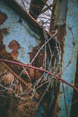 Penallta Colliery (abandoned), South Wales (meganjenks) Tags: mining coalmine abandonedphotography abandonedplaces abandoned urbanphotography urban urbex canonphotographer canonphotography canon