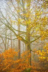 Lindauer Moor 251118-16v (martinritter1) Tags: herbst autumn nebel wald frog