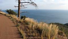 dans l'Estérel (b.four) Tags: herbe grass erba mer sea mare estérel agay var