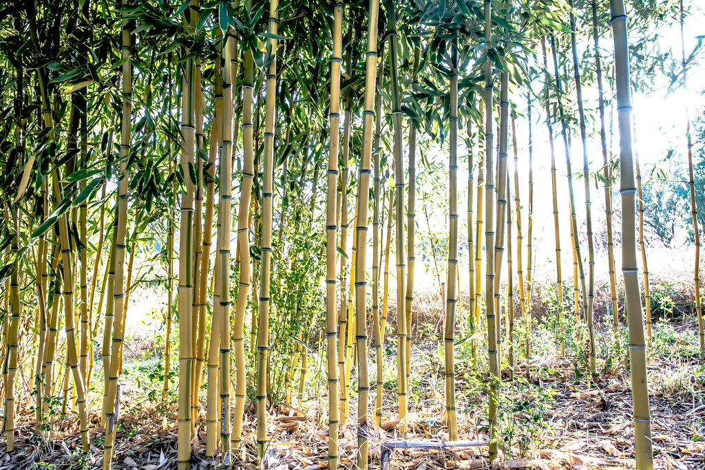 The World S Best Photos Of Bamboo And Bambus Flickr Hive Mind