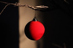 Red Bauble (Heaven`s Gate (John)) Tags: ball bauble christmas december season holiday tree light simple johndalkin heavensgatejohn decoration sunlight shadow england red 10faves 25faves 50faves
