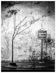 _DSC4506-Mr-2 (gillesporlier) Tags: pavement trottoir arbre tree dark sombre wall mur nikon d750 pancarte sign monochrome street rue soir night bnw noiretblanc blackandwhite vieux old texture