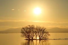 Lake Biwa (Teruhide Tomori) Tags: lakebiwa shiga kohoku landscape winter lake japan japon water afternoon evening nature 琵琶湖 湖北 日本 関西 滋賀県 自然 風景 夕景 sky sunset tree happyplanet asiafavorites