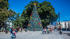 2018 - Mexico - Oaxaca - Zocalo Christmas (Ted's photos - Returns late Feb) Tags: 2018 cropped mexico nikon nikond750 nikonfx oaxaca tedmcgrath tedsphotos tedsphotosmexico vignetting oaxacaoaxaca oaxacazocalo christmastree people peopleandpaths pathsandpeople tree