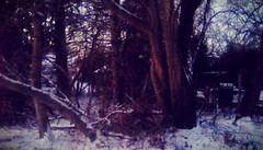 Backyard trees - TMT (Maenette1) Tags: backyard trees dawn snow menominee uppermichigan treemendoustuesday flicker365 allthingsmichigan absolutemichigan projectmichigan michiganwinter