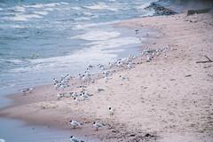 Winter in Gdynia (escymonka) Tags: beach winter seagulls waves ocean sea baltic balticsea gdynia nature landscape canon canoneos77d seascape
