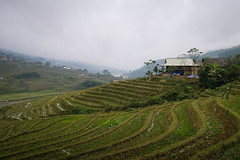 Another Stepped Rice Farm, Ta Van Village, Sapa, Vietnam (hathaway_m) Tags: northvietnam 2018 sapa rice steppedfield