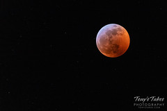 January 20, 2019 - The total lunar eclipse and the stars. (Tony's Takes)