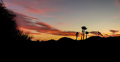 A Peaceful Evening (http://fineartamerica.com/profiles/robert-bales.ht) Tags: arizona facebook foothills forupload haybales land people photo photouploads places projects states sunsetorsunrise sunrise sunset redsky twilight yellow clouds landscape spectacular desertphotography panoramic surreal sublime sonora inspirational path morning silhouette scenic sunrisephotography red sonoradesert robertbales desertecosystem desert nature sky yuma gilamountains dusk dawn scene sunlight colorful view tranquil vibrant outdoor black beauty last