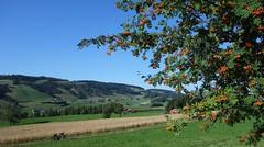 DSC05651 (ursrüegsegger) Tags: linden juli august getreideernte bauernhöfe landschaft regenbogen
