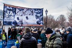Save the Wolves (torbusfoto) Tags: norway crowds worldwidefundfornature oslo demonstration norwegianparliament people fujifilmx100f photojournalism dyrsrettigheter winter karljohan wwf streetphotography cold rovdyr savethewolves ulv