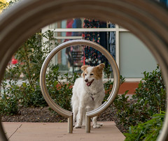 5/52 Nadja (utski7) Tags: 52weeksfordogs february2019 winter arizona tempemarketplace tempe bikeracks loops dog shops colors
