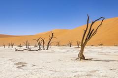 _RJS4639 (rjsnyc2) Tags: 2019 africa d850 desert dunes landscape namibia nikon outdoors photography remoteyear richardsilver richardsilverphoto safari sand sanddune travel travelphotographer animal camping nature tent trees wildlife