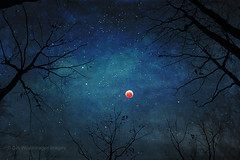 look at the moon (Dyrk.Wyst) Tags: cosmos mondfinsternis volmond darkness fullmoon magical moon mooneclipse nature orange silhouettes stars trees wolfmoon photoillustration painterly night