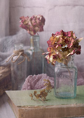 Decaying Beauties (Jazpix) Tags: stilllife antiquebottles hydrangea flowers whitewash oldbook textures woven indoor windowsill sonya58 sony50mm18