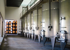 Undurraga Vineyard-0348 (kasiahalka) Tags: undurragavineyard vineyard winery viña undurraga wine chile talagante regiónmetropolitana camino melipilla 34south america