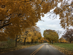 November Gold (horizontal) (smfmi) Tags: autumn trees fallcolor fallfoliage michigan michiganfallcolor