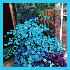 november blues (j.p.yef) Tags: peterfey jpyef yef seasons autumn iphone digitalart photomanipulation city street germany hamburg blue square leaves