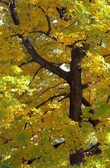 """Cincinnati - Spring Grove Cemetery & Arboretum """"Infrastructure"""" (David Paul Ohmer) Tags: cincinnati ohio spring grove cemetery arboretum autumn fall"""