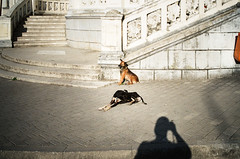 we are wild dogs (gato-gato-gato) Tags: 35mm asph iso400 ilford ls600 leica leicamp leicasummiluxm35mmf14 mp messsucher noritsu noritsuls600 strasse street streetphotographer streetphotography streettogs summilux wetzlar analog analogphotography aspherical believeinfilm black classic film filmisnotdead filmphotography gatogatogato gatogatogatoch homedeveloped manual mechanicalperfection rangefinder streetphoto streetpic tobiasgaulkech white wwwgatogatogatoch zugdidi samegrelozemosvaneti georgien ge manualfocus manuellerfokus manualmode strase onthestreets mensch person human pedestrian fussgänger fusgänger passant georgia travel adventure tbilisi batumi borjomi bordschomi anaklia kaukasus abchasia blacksea