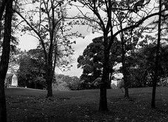 Parque Omar (Neo-noir) Tags: park panama countryside vida tree america blackandwhite parque