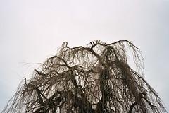 (michel nguie) Tags: michelnguie whitesky tree sku clouds branches winter roubaix rbx