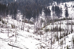 Winter scene of burned trees, remnants of the Sawback Prescribed Burn of 1993, as seen in 2019 along the Bow Valley Parkway in Banff National Park (m01229) Tags: bowvalleyparkway calm peaceful nature frost destination snow trees national road banff burned canada bowvalley canadianrockies valley landscape winter rocky mountains historic outdoor travel winterscene scenic clouds sawbackprescribedburn1993 rockies canadian adventure scenery beautiful highway forest alberta banffnationalpark river park panoramic tourism wilderness mountain