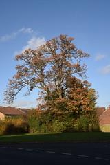 DSC_2239 (PeaTJay) Tags: nikond750 reading lowerearley berkshire gardens outdoors flora fauna plants flowers trees bushes