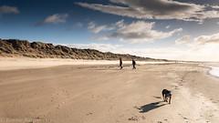 wee dog, big beach (RCB4J) Tags: ayrshire ayrshirecoast babygrace clydecoast firthofclyde irvinebeach jakob rcb4j ronniebarron scotland siameselurcher trailhound adventure art beach dogwalkadventures dogs photography sandstorm severeconditions spectactular windy