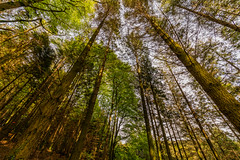 Hatch Wood (trevorhicks) Tags: tavistock england unitedkingdom gb hatch naked nude devon leaves branch outdoor canon 5d mark iv tamron green sunlight moss ivy