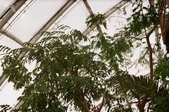 Botanica (Pomegranate_seeds) Tags: 35mm film photography denmark botanical garden filmography photographer arts analog analogphotography flora