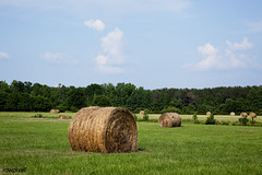 Hay bales dot the landscape of the 69.2 acre farm near Carrollton, Alabama. Original image from Carol M. Highsmith's America, Library of Congress collection. Digitally enhanced by rawpixel. (Free Public Domain Illustrations by rawpixel) Tags: agriculture alabama amazing america american automaticsystem beautiful blue carolhighsmith carolmhighsmith cc0 chaff champaign cloud country countryside drystalks farm field grass green greenery hay haybales haystack landscape name nature nobody plant plants processing producing rural ruralamerica ruralscene sky south straw tree unitedstates unitedstatesofamerica us usa wheatstraw wonderland