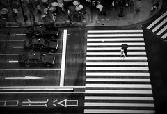Urban rain (reiko_robinami) Tags: street streetphotography cityscape urban outdoors rain crosswalk umbrella monochrome blackandwhite tokyo japan